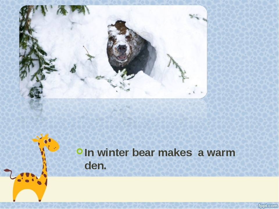 In winter bear makes a warm den.