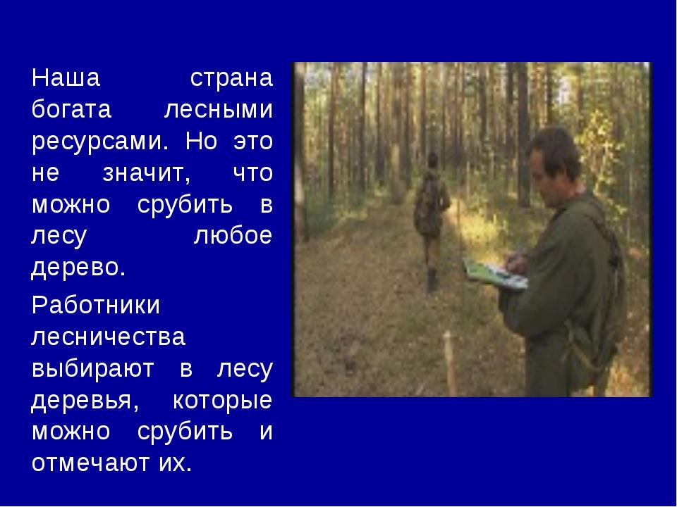 Наша страна богата лесными ресурсами. Но это не значит, что можно срубить в л...