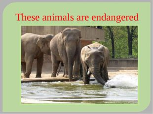 These animals are endangered