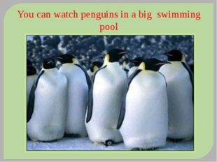 You can watch penguins in a big swimming pool