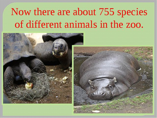 Now there are about 755 species of different animals in the zoo.