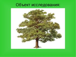 Объект исследования: дерево