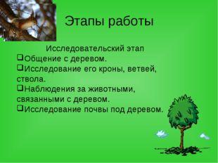 Этапы работы Исследовательский этап Общение с деревом. Исследование его кроны