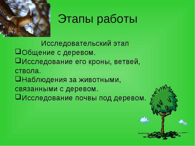 Этапы работы Исследовательский этап Общение с деревом. Исследование его кроны...