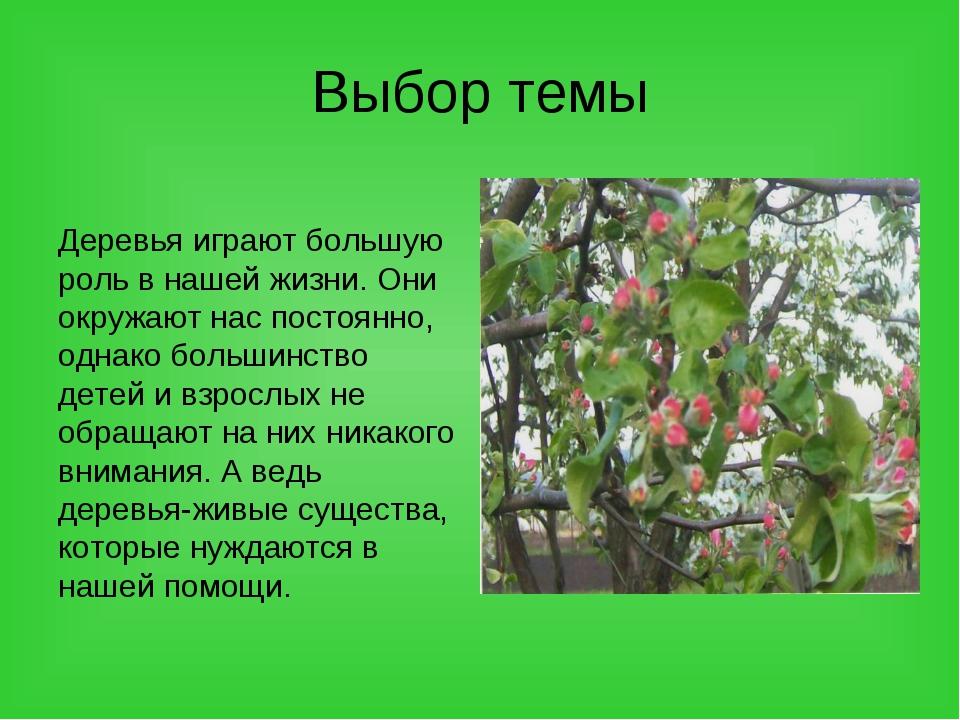 Выбор темы Деревья играют большую роль в нашей жизни. Они окружают нас постоя...