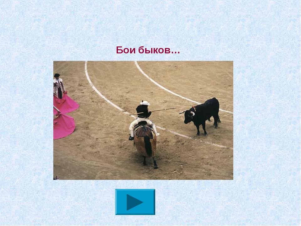 Бои быков…