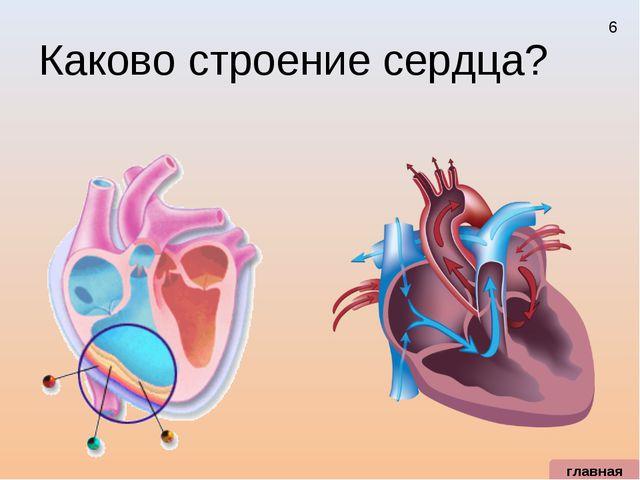 Каково строение сердца? главная 6