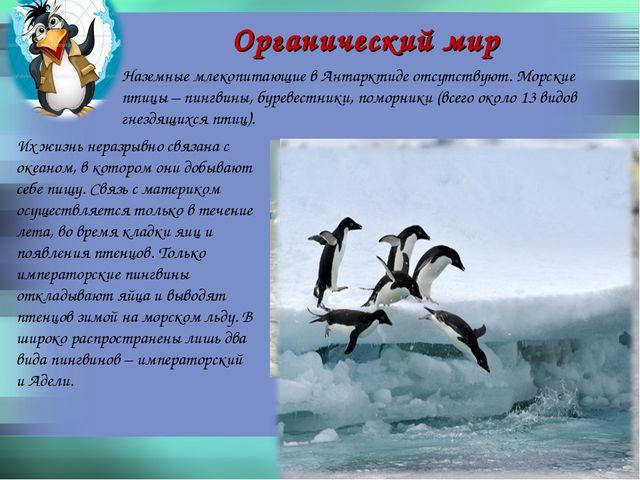 Органический мир Наземные млекопитающие в Антарктиде отсутствуют. Морские пти...