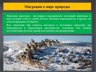 Миграции в мире природы Миграции животных - регулярное передвижение популяций