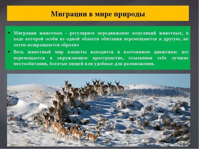 Миграции в мире природы Миграции животных - регулярное передвижение популяций...