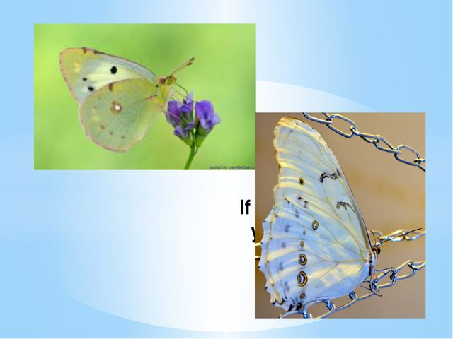 If the first butterfly you see in spring is white – you'll be lucky.