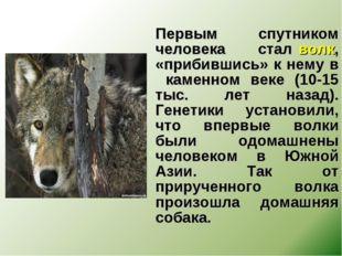 Первым спутником человека стал волк, «прибившись» к нему в каменном веке (10
