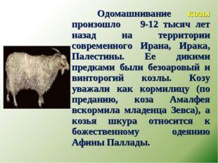 Одомашнивание козы произошло 9-12 тысяч лет назад на территории современного
