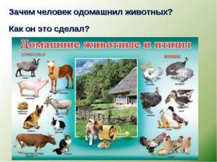 Зачем человек одомашнил животных? Как он это сделал?