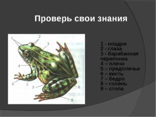 Проверь свои знания 1 - ноздри 2 - глаза 3 - барабанная перепонка 4 – плечо 5