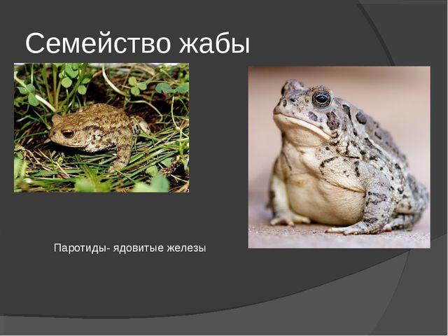 Семейство жабы Паротиды- ядовитые железы