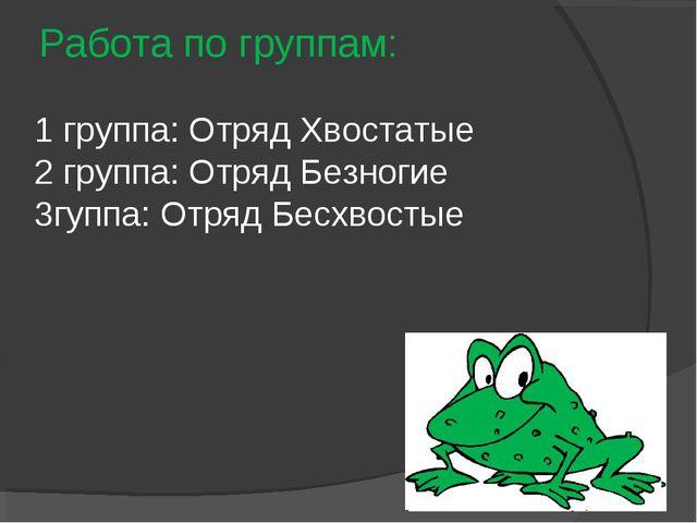 Работа по группам: 1 группа: Отряд Хвостатые 2 группа: Отряд Безногие 3гуппа:...