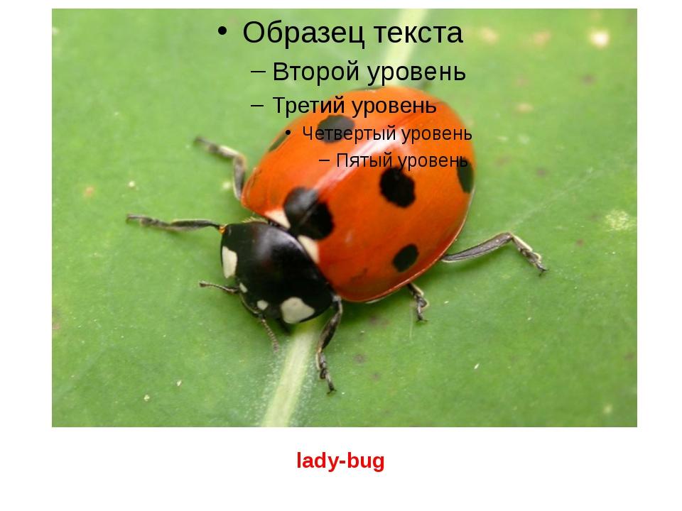 lady-bug