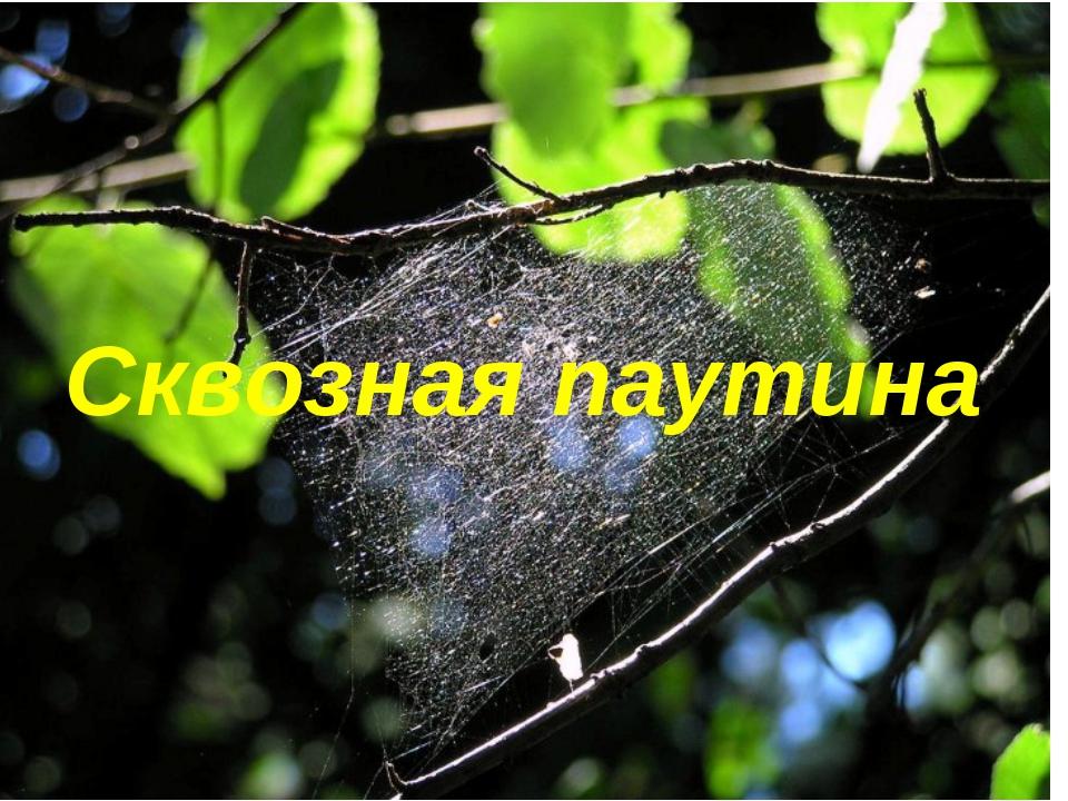 Сквозная паутина