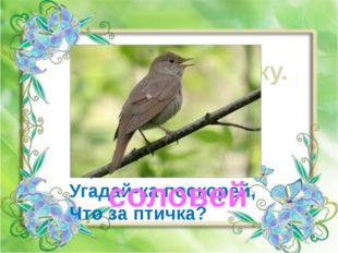 Отгадай загадку. Он весной поёт красиво, Звонко, весело, игриво! Угадай-ка по