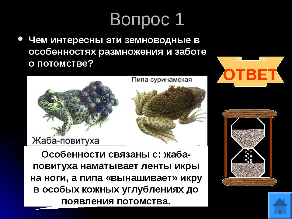 Вопрос 1 Чем интересны эти земноводные в особенностях размножения и заботе о...