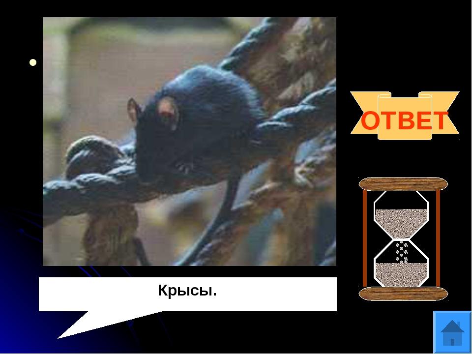 Вопрос 3 За 5 хвостов этих животных на острове Ява выдавали удостоверение лич...
