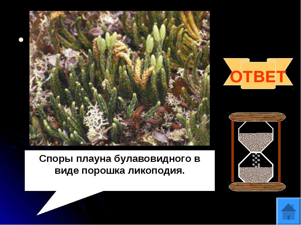 Вопрос 7 Споры какого растения использовались в качестве присыпки в медицине...