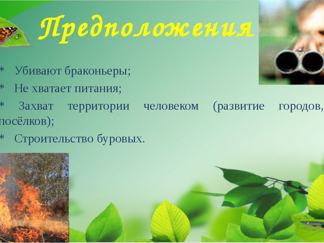 Предположения * Убивают браконьеры; * Не хватает питания; * Захват территории...