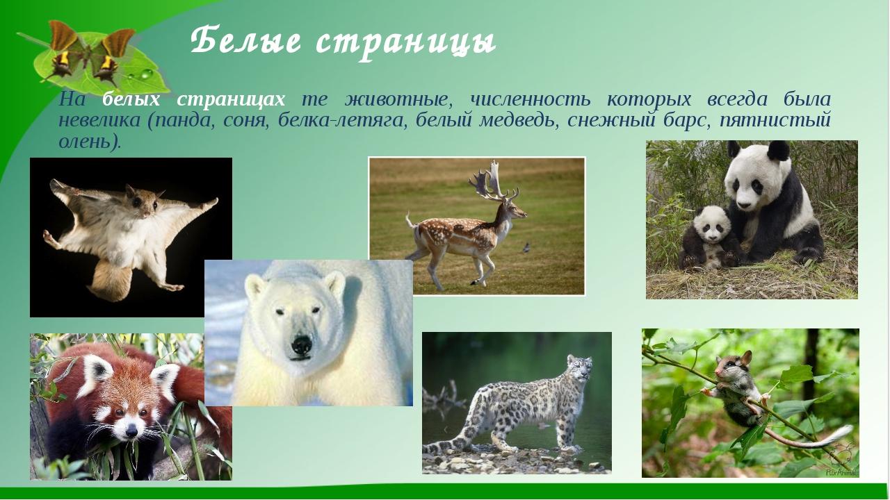 Белые страницы На белых страницах те животные, численность которых всегда был...
