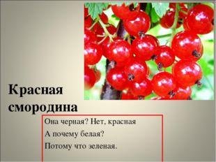 Красная смородина Она черная? Нет, красная А почему белая? Потому что зеленая.