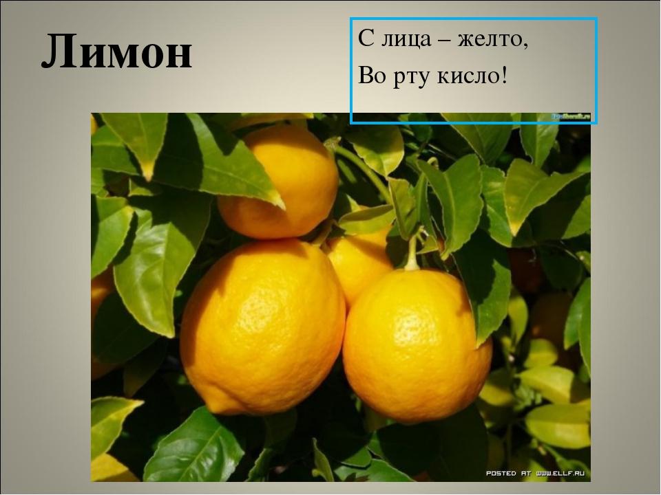 Лимон С лица – желто, Во рту кисло!