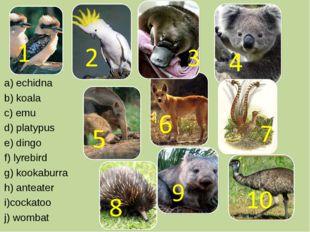 a) echidna b) koala c) emu d) platypus e) dingo f) lyrebird g) kookaburra h)