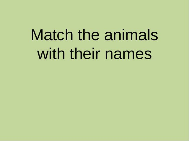 Match the animals with their names