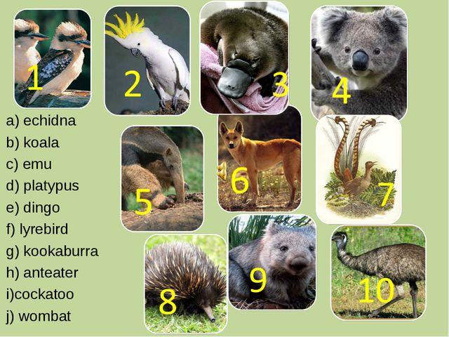 a) echidna b) koala c) emu d) platypus e) dingo f) lyrebird g) kookaburra h)...