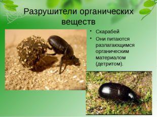 Разрушители органических веществ Скарабей Они питаются разлагающимся органиче