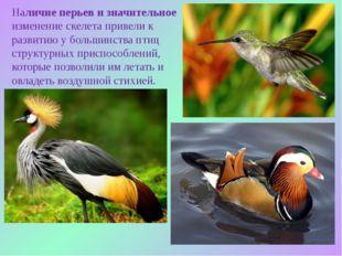 Наличие перьев и значительное изменение скелета привели к развитию у большинс