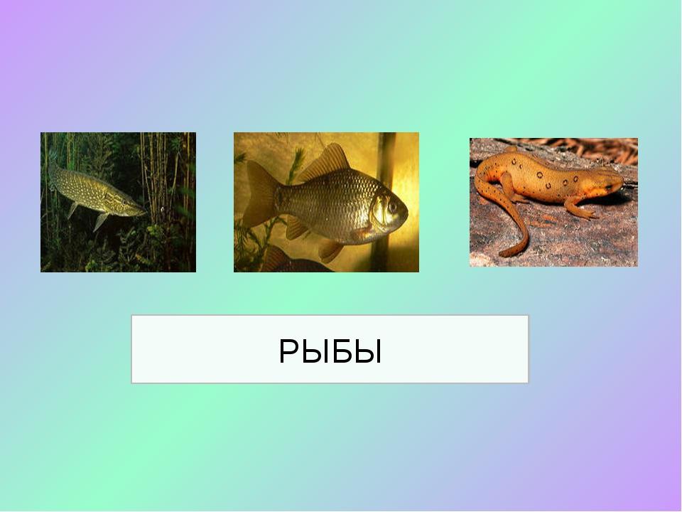 РЫБЫ Птицы: общие признаки, особенности внешнего строения.