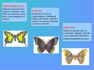 Махаон Живёт во многих местах в Евразии, Африки, Японии. Очень красивая бабоч