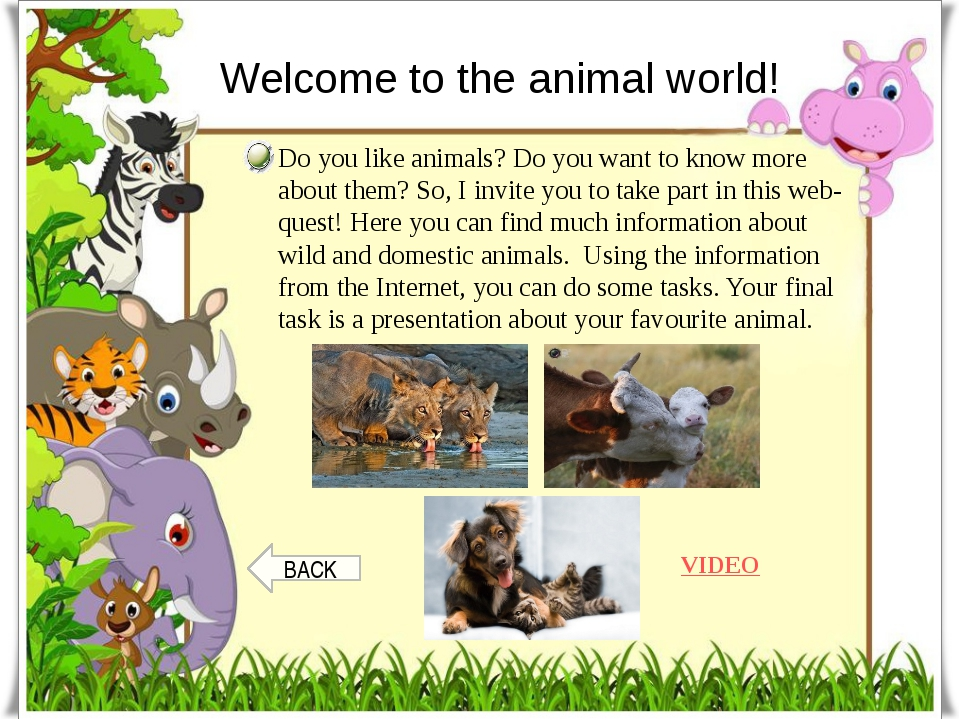 Welcome to the animal world! Do you like animals? Do you want to know more ab...
