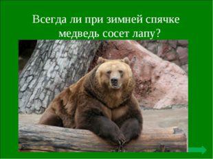 Всегда ли при зимней спячке медведь сосет лапу? Не сосет никогда - это все вы