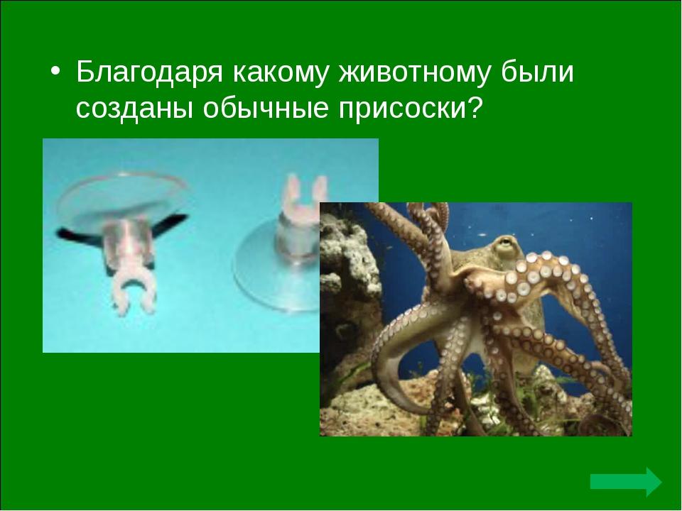 Благодаря какому животному были созданы обычные присоски?