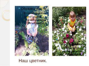 Наш цветник.