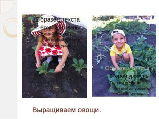 Выращиваем овощи.