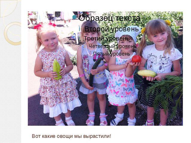 Вот какие овощи мы вырастили!