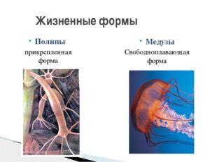 Полипы прикрепленная форма Жизненные формы Медузы Свободноплавающая форма