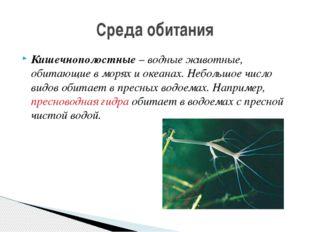 Кишечнополостные – водные животные, обитающие в морях и океанах. Небольшое чи