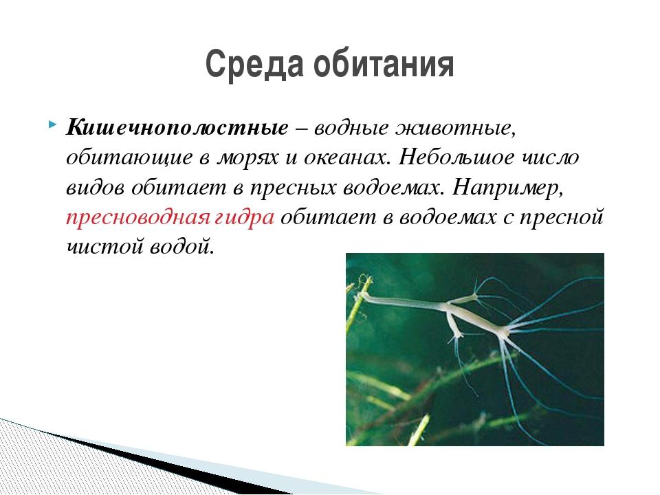 Кишечнополостные – водные животные, обитающие в морях и океанах. Небольшое чи...