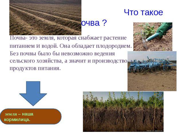Что такое почва ? Почва- это земля, которая снабжает растение питанием и вод...