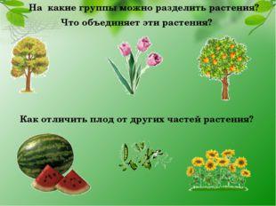 На какие группы можно разделить растения? Что объединяет эти растения? Как от