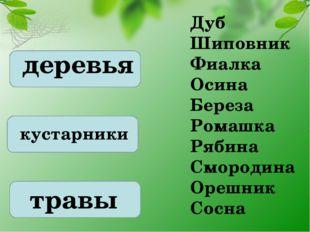 деревья кустарники травы Дуб Шиповник Фиалка Осина Береза Ромашка Рябина Смор